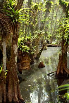 The beauty of a Florida swamp .. photographer David Moynahan