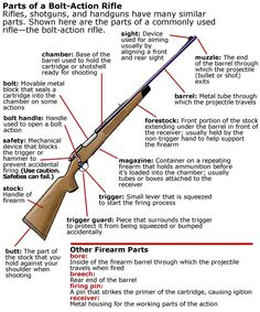 Diagram showing parts of a bolt-action rifle (South Carolina Hunter Safety Course)