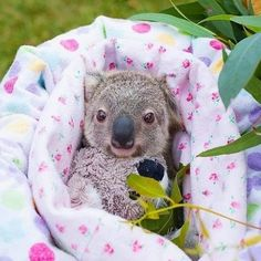 Happy Animals, Cute Funny Animals, Cute Baby Animals, Animals And Pets, Cute Dogs, Adorable Babies, Wild Animals, Bindi Irwin, Baby Animals Pictures