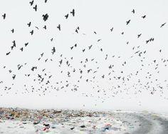 Je vous présente cette magnifique série photographique réalisée par le photographe roumain Tamas Dezso. Il donne son regard sur un monde en décomposition, celui du milieu rural où les habitants tels des fourmis grignotent et déplacent de petites parties de monuments industriels imposés par une modernisation forcée.