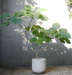 Cactus House Plants, House Plants Decor, Home Garden Plants, Indoor Garden, Foliage Plants, Potted Plants, Indoor Plants, Flower Vases, Flower Pots