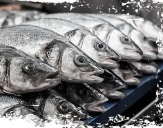 Sustainability - Flying Fish Seafoods Us Vets, Fish And Seafood, Sustainability, Sustainable Development