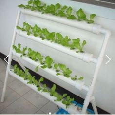 Hydroponics System DIY NFT * CHILDREN'S DAY SALE on Carousell