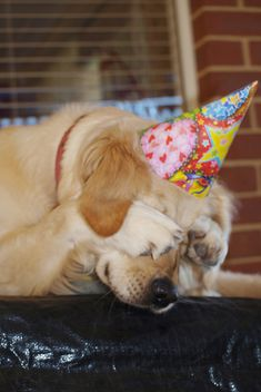 No peeking just yet! :)  I used to put a birthday hat on my dog and he would get this humiliated look on his face......