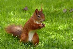 Garden, Animal, Mammal, Squirrel #garden, #animal, #mammal, #squirrel