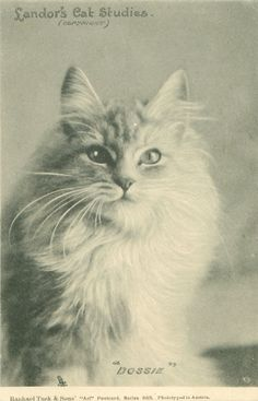 1000+ images about Vintage cats;-) on Pinterest