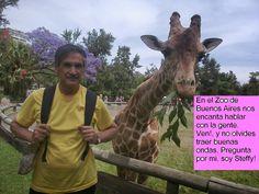 En la Era de la Comunicación: Jirafas conversadoras La jirafita Steffy invita a que le visiten en el Zoo de Buenos Aires.