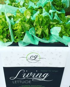 because it's still alive! Future Farms, We Are Young, Lettuce, Trinidad And Tobago, Join, Gardens, Fresh, Outdoor Gardens, Salads