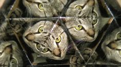 Kaleidoscope Cat