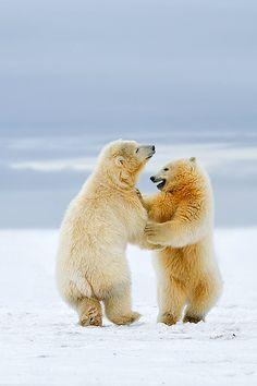 ˚Arctic Dance - Polar bear cubsbySiddhardha Garige