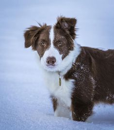 Check out these Border Collies with some of the best dog names