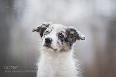 http://ift.tt/1K6283m #animals Puppy by huskana http://ift.tt/1QkJtDG #pierceandbiersadorf