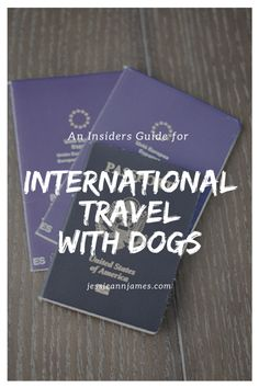 HOW TO TRAVEL INTERNATIONAL WITH DOGS