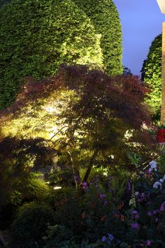 The Harrods British Eccentrics Garden lit with our Lofoot mini projectors #RHSChelsea