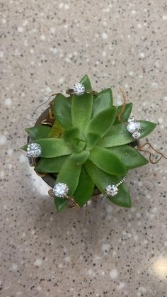 www.engagejeweler.com to start designing your dream engagement ring. Over 600 ring designs and 100,000 diamond options. Dream Engagement Rings, Designer Engagement Rings, Engagement Inspiration, Ring Designs, Diamond Rings, Succulents, Wedding Planning, Wedding Decorations, Wedding Rings