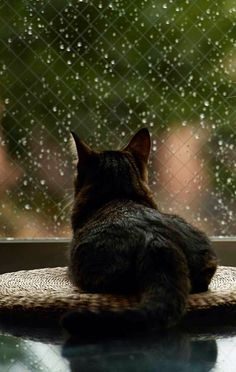 Cats and Dogs know how to take advantage of rainy days, sunny days and each and every moment to become aware of the beauty and silence of that moment. Rejuvenation takes place. Cool Cats, I Love Cats, Crazy Cat Lady, Crazy Cats, Animals And Pets, Cute Animals, Gatos Cool, Gato Grande, Photo Chat