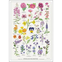 Koustrup & Co. plakat i - spiselige blomster - Hokus Krokus Indoor Garden, Indoor Plants, Outdoor Gardens, Most Beautiful Gardens, Beautiful Flowers Garden, Fall Flowers, Summer Flowers, Rose Care, Bokashi