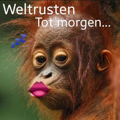 Baby Orangutan Kissing - Lantern Press Photography (Art Print Available), Size: 24 x 16 Acrylic Hanging Wall Decor, Multi Primates, Mammals, Cute Baby Animals, Animals And Pets, Funny Animals, Beautiful Creatures, Animals Beautiful, Unusual Animals, Hello Beautiful