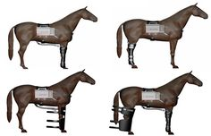 Horse Therapy, Massage, Rice, Muscle, Healing, Horses, Cold, Paint, Design