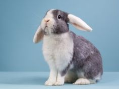 How to Keep Rabbits Warm in Winter & Cool During the Summer   Pets4Homes
