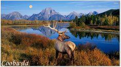 2016 Top Quality Huge Realistic Animal Oil Painting Deer Elk ...