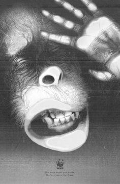 WWF: Orangutan