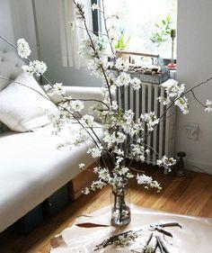 arranging white cherry blossoms, gardenista
