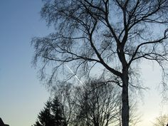 Winter trees in Hagen  -by Sabine Weissbach