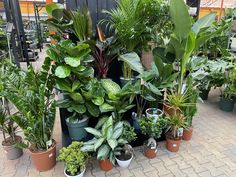 Amsterdam, Plants, Plant, Planets