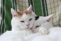 Shiro and Mimi