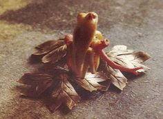 Fossil Walrus Tree Frog Carving Copper Base