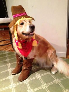 Someone Needs To Remind Bailey The Golden Retriever That She Is A Dog, Not A Human
