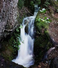 WASSER - URquell des Lebens 💚 Heute bei meinem Morgenspaziergang durch den Wald... Als Embryos bestanden wir zu 85 Prozent aus Wasser und schwammen 9 Monate lang in FRUCHTwasser. Der Körper eines ErWACHSENen besteht immer noch zu rund 70 Prozent aus Wasser,  das Gehirn interessanterweise sogar zu 80 Prozent. Allen müsste klar sein, wie wichtig reines Trinkwassser für uns und alle Lebewesen ist. Umso erstaunlicher ist es, wie achtlos wir damit umgehen (Verschmutzung der Meere, Gewässer und… Waterfall, Outdoor, Amniotic Fluid, Nine Months, Brain, Swimming, Woodland Forest, Outdoors, Waterfalls
