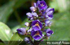 Flora de Hawaii