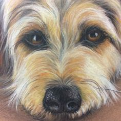 Drawing done in pastels Background Pics, Pastels, Art Drawings, Dogs, Cute, Animals, Backgrounds, Animales, Animaux