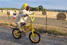 #funny #dog #bike #froome #nibali