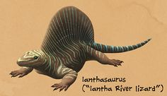 Weird Backs Month #03 – IanthasaurusThe synapsids diversified rapidly following their first appearance in the geologic record, and two particular families developed large showy sailbacks completely independently of each other: the edaphosaurs and the sphenacodonts.Ianthasaurus here was a basal edaphosaur, known from the the Late Carboniferous of Kansas, USA (~302 mya). It was smaller than many of its more famous relatives, only about 75cm long (2′5″), and seems to have been an insect-h...