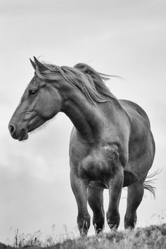 Horse on a Windy Cape by Tracy Munson on 500px