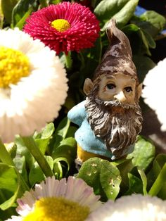 gnome in my flower pot ! :0) debs1208