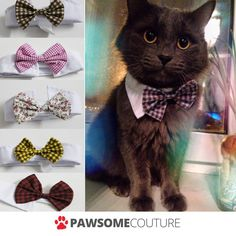 We've some amazing new bow ties just in which look seriously trendy on your fur balls! My cat doesn't mind them at all and doesn't find it annoying, he looks very handsome in it too The tie comes wi Cat Bow Tie, Bow Ties, Dog Bows, Cat Costumes, Cats And Kittens, Kitty Cats, Cool Cats, Dog Cat, Cute Animals