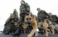 German Shepherd Training: 32 pictures of war dogs you need to see to believe … – Sam ma Dog Training Army Dogs, Police Dogs, Military Working Dogs, Military Dogs, Military Army, Military Service, Amor Animal, German Shepherd Dogs, Pictures Of German Shepherds