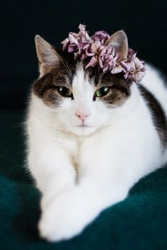 Why not make a flower crown for you favourite feline. All you need are a needle, a thread and some petals - Cloverhome.nl