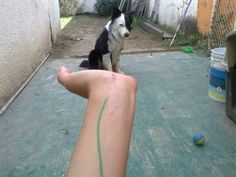 Coco on my hand