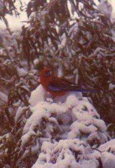 Cinquain - Bird