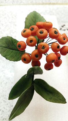 My first sugar rowan berries - by Katty