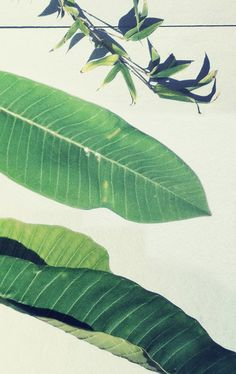 Image discovered by Find images and videos about nature, green and wallpaper on We Heart It - the app to get lost in what you love. Art Et Design, Life Design, Vintage Poster, Color Stories, Tropical Leaves, Green Plants, Tropical Paradise, Natural World, Shades Of Green