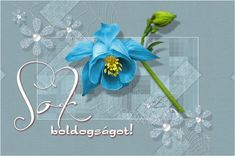 Névnapi-születésnapi képeslapok Hanukkah, Congratulations, Wreaths, Pink, Decor, Quotes, Quotations, Decoration, Door Wreaths