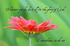1 Corinthians 10:31b