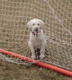 Wanna play lacrosse? I'll be the goalie!