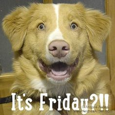 It's Friday! ✿